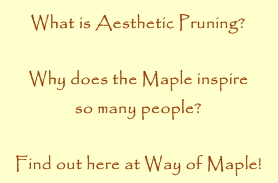 What is aesthetic pruning? Why does the maple inspire people? find out here at Way of Maple!